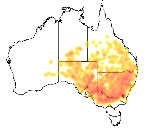 distribution map showing range of Morethia boulengeri in Australia