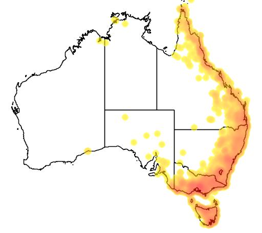 distribution map showing range of Myiagra cyanoleuca in Australia