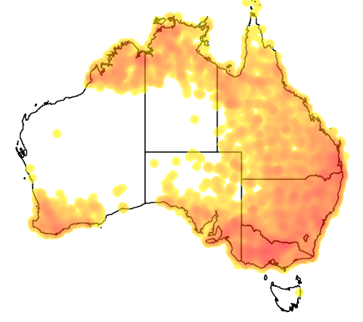 distribution map showing range of Myiagra inquieta in Australia