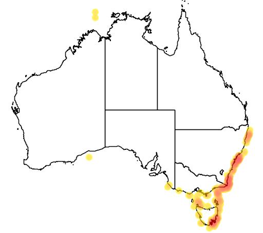 Narcine tasmaniensis