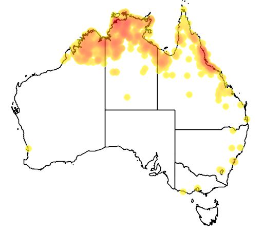 distribution map showing range of Neochmia phaeton in Australia