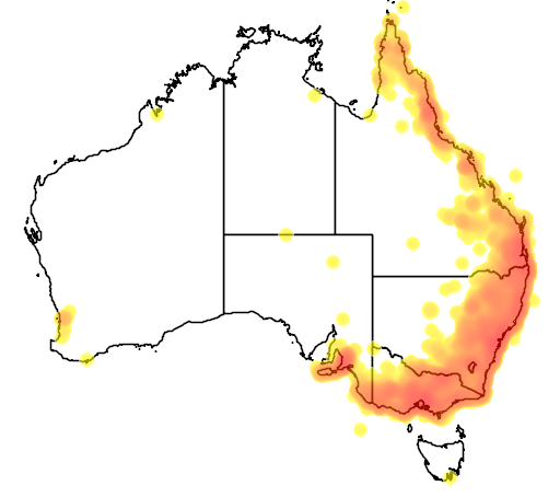 distribution map showing range of Neochmia temporalis in Australia