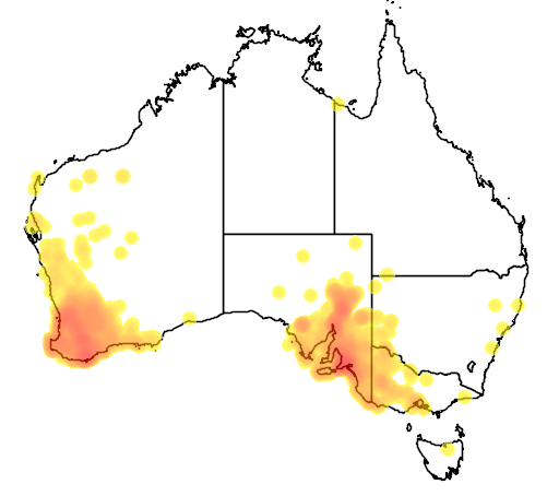 distribution map showing range of Neophema elegans in Australia
