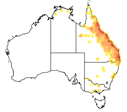 distribution map showing range of Nettapus coromandelianus in Australia