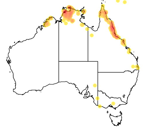 distribution map showing range of Ninox rufa in Australia
