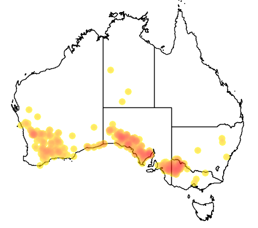 distribution map showing range of Notomys mitchelli in Australia