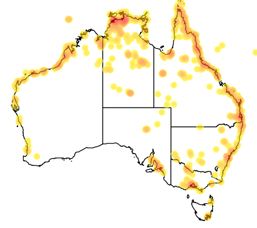distribution map showing range of Numenius minutus in Australia