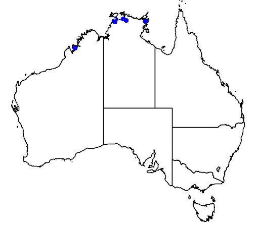 Odonteleotris macrodon
