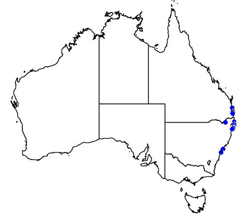 Opistognathus jacksoniensis