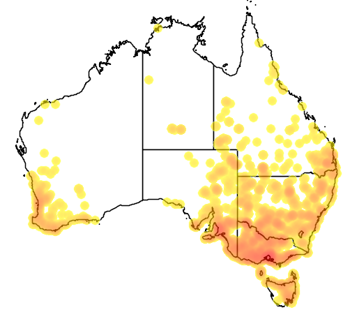 distribution map showing range of Oxyura australis in Australia