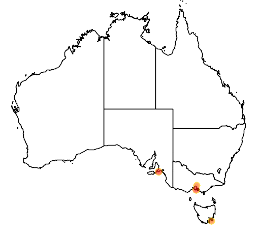 distribution map showing range of Pagodroma nivea in Australia