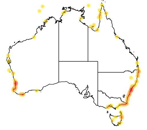 distribution map showing range of Pelamis platurus in Australia