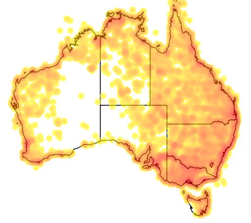 distribution map showing range of Pelecanus conspicillatus in Australia