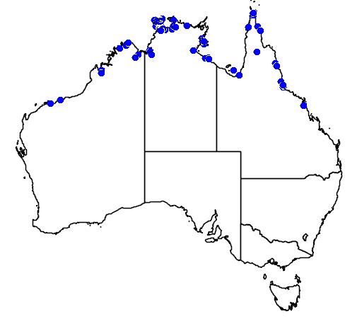 distribution map showing range of Peneoenanthe pulverulenta in Australia