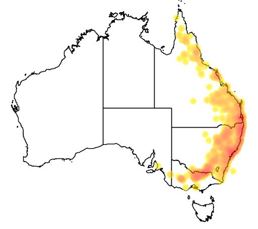 distribution map showing range of Petaurus norfolcensis in Australia