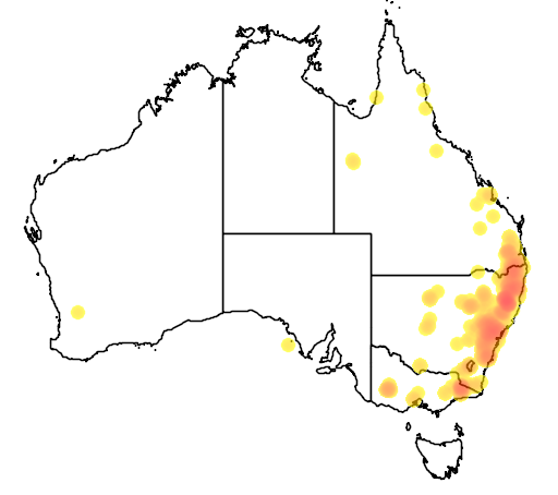 distribution map showing range of Petrogale penicillata in Australia
