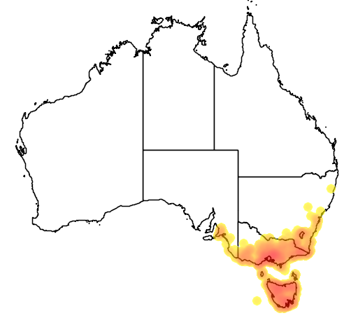 distribution map showing range of Petroica rodinogaster in Australia
