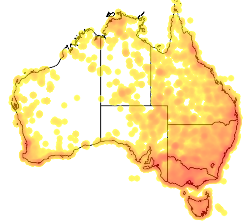 distribution map showing range of Phalacrocorax carbo in Australia