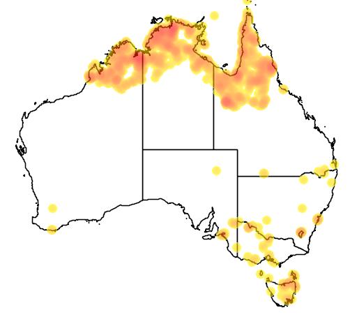 distribution map showing range of Phalacrocorax melanoleucos in Australia