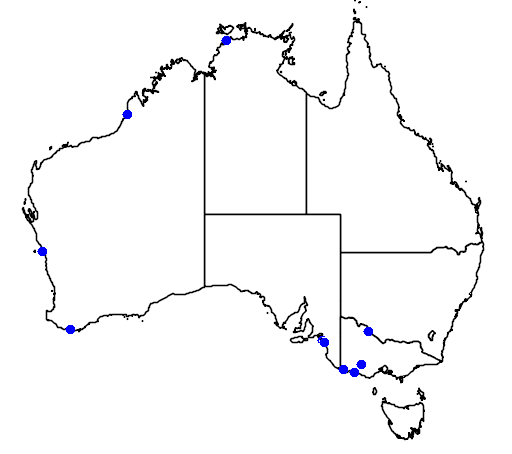 distribution map showing range of Phalaropus fulicaria in Australia