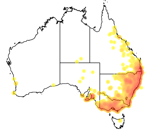 distribution map showing range of Phascolarctos cinereus in Australia