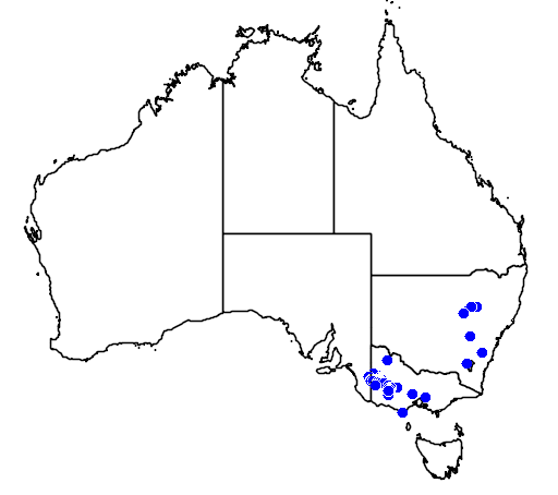 distribution map showing range of Phebalium stenophyllum in Australia
