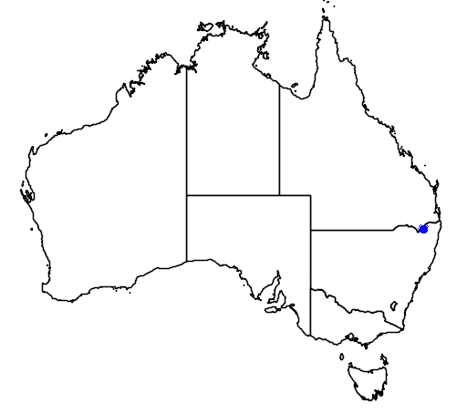 distribution map showing range of Phebalium whitei in Australia