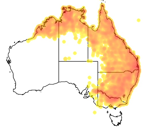 distribution map showing range of Philemon citreogularis in Australia
