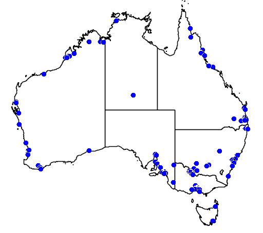 distribution map showing range of Philomachus pugnax in Australia