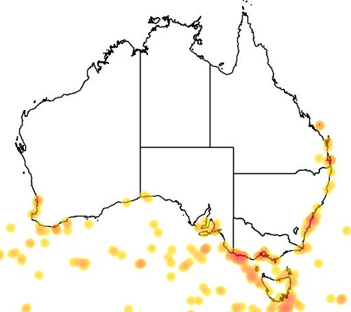 distribution map showing range of Phoebetria fusca in Australia