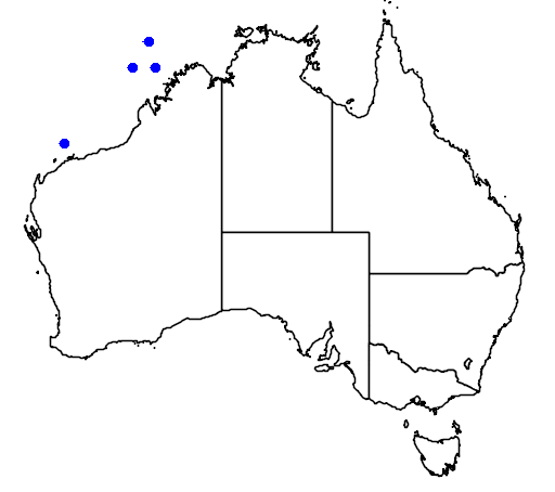 distribution map showing range of Phylloscopus borealis in Australia