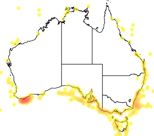 distribution map showing range of Physeter catodon in Australia