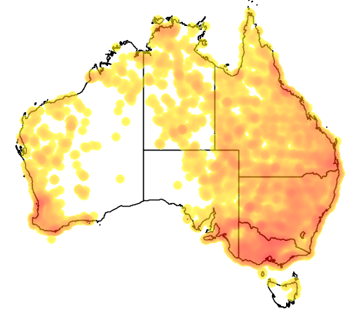 distribution map showing range of Platalea flavipes in Australia