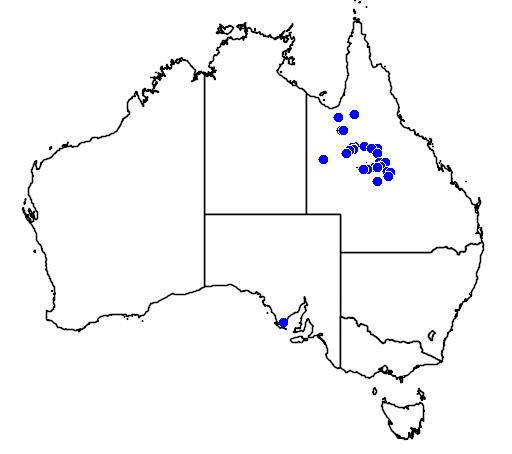 distribution map showing range of Pogona henrylawsoni in Australia