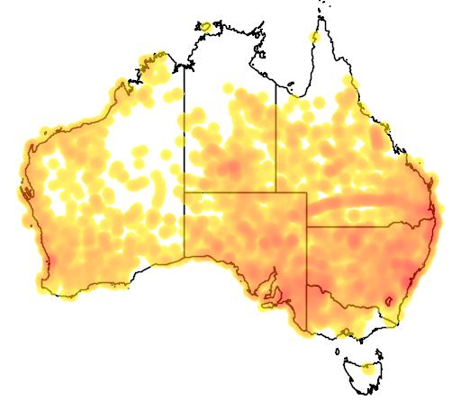 distribution map showing range of Pogona mitchelli in Australia