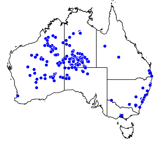 distribution map showing range of Polytelis alexandrae in Australia