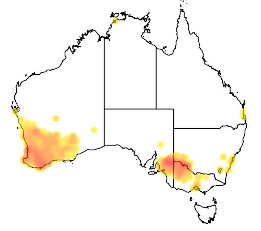 distribution map showing range of Polytelis anthopeplus in Australia