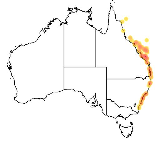 Pomacentrus australis