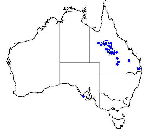 distribution map showing range of Pseudechis colletti in Australia
