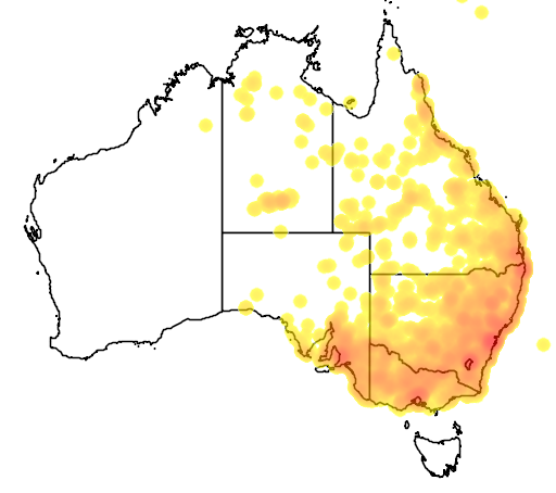 distribution map showing range of Pseudonaja textilis in Australia