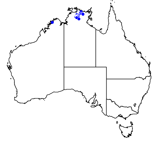 distribution map showing range of Pseudothecadactylus lindneri in Australia