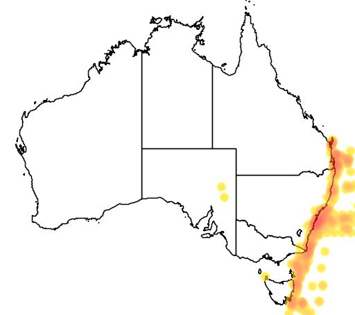 distribution map showing range of Pterodroma solandri in Australia