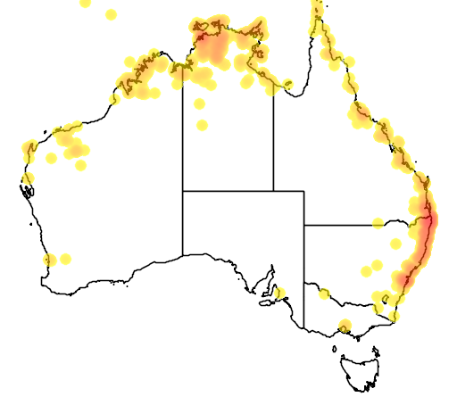 distribution map showing range of Pteropus alecto in Australia