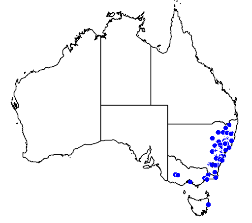 distribution map showing range of Pterostylis coccina in Australia