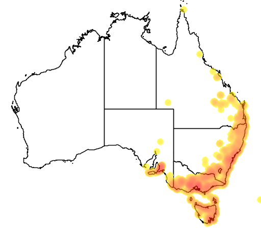 distribution map showing range of Pterostylis nutans in Australia