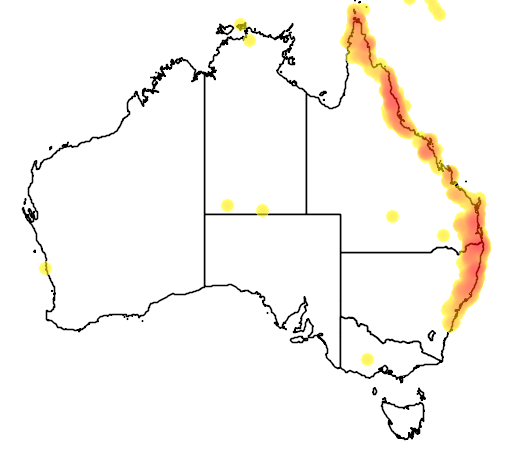 distribution map showing range of Ptilinopus magnificus in Australia