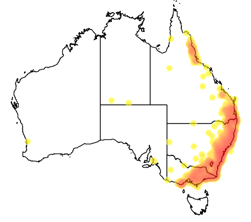 distribution map showing range of Ptilonorhynchus violaceus in Australia