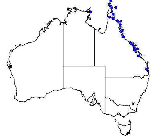 distribution map showing range of Ptychosperma elegans in Australia