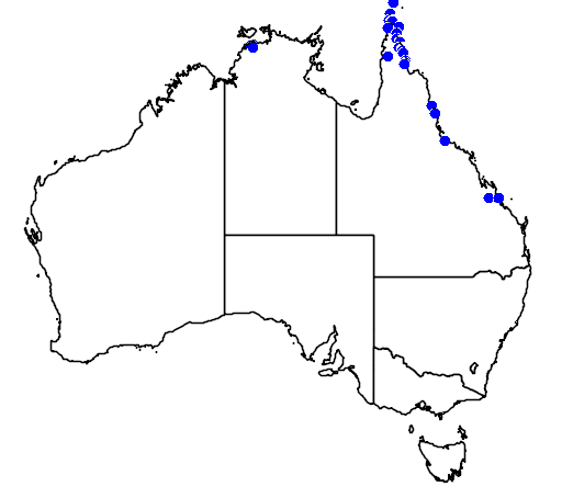 distribution map showing range of Ptychosperma macarthurii in Australia