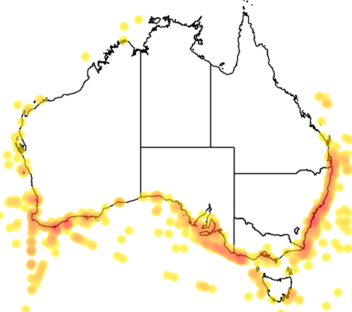 distribution map showing range of Puffinus carneipes in Australia